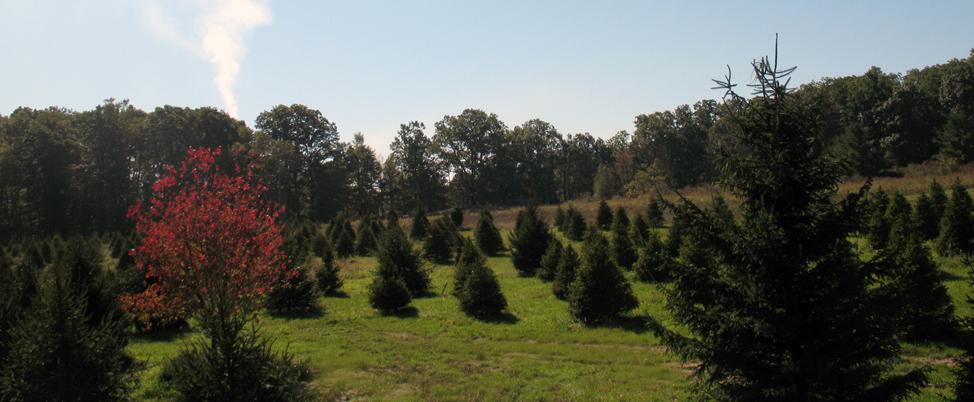 Tree Planters Llc Nursery